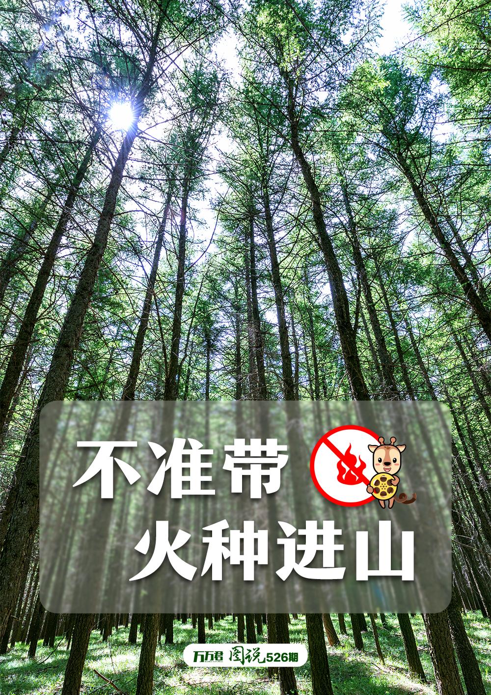 """""""森林防火需注意,""""十个不准""""要谨记!"""